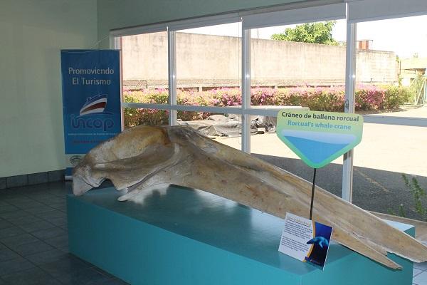 vidaedu parque aquatico esparza voluntariado costa rica