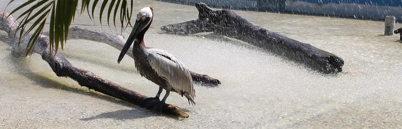 Parque Marinho e Reabilitação de Animais na Costa Rica