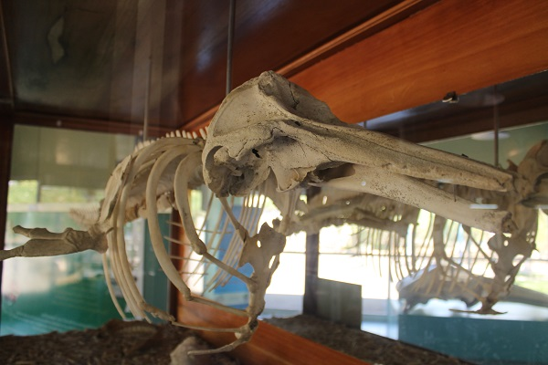 vidaedu voluntariado internacional costa rica animais marinhos esparza