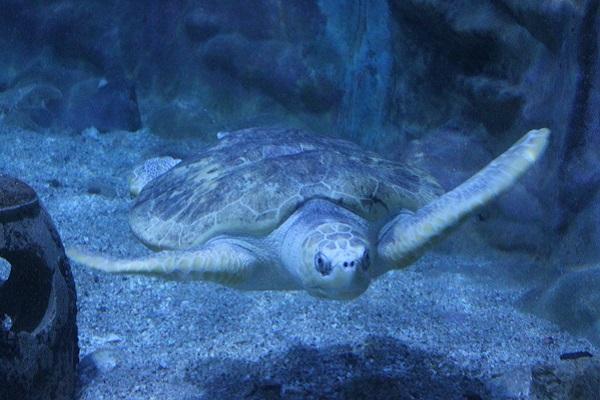 vidaedu voluntariado internacional tartarugas esparza costa rica