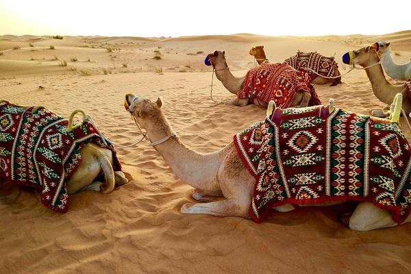 vidaedu trabalhar viajar emirados arabes unidos dubai