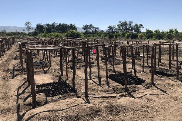 vidaedu meio ambiente voluntariado quenia