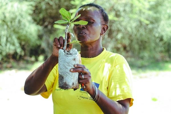 vidaedu quenia voluntariado internacional ambiente